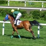 夏競馬は3歳馬と古馬ではどちらが強いのか?降級馬と上がり馬はどちらを買うべきか?