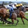 差し馬の複勝で勝つ方法